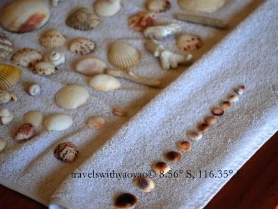 Big Shells And Small Shells And Starfish, Oh My!